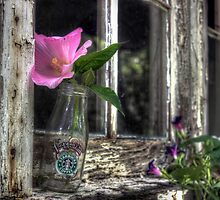 Starbuck with Wildflowers by Kyle Wilson