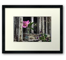 Starbuck with Wildflowers Framed Print