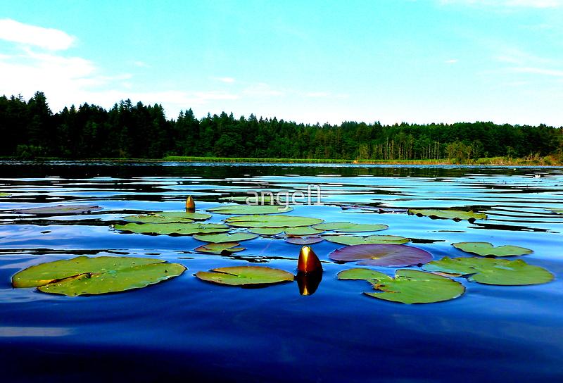 Lake Lugenau ~ Boebing, Bavaria by ©The Creative  Minds