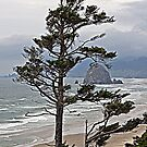 """Oregon Coastline"" by Lynn Bawden"