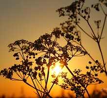 Sunset from Burton on the Wolds by Jonathan Cox