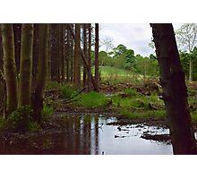 Wood #6 Photographic Print