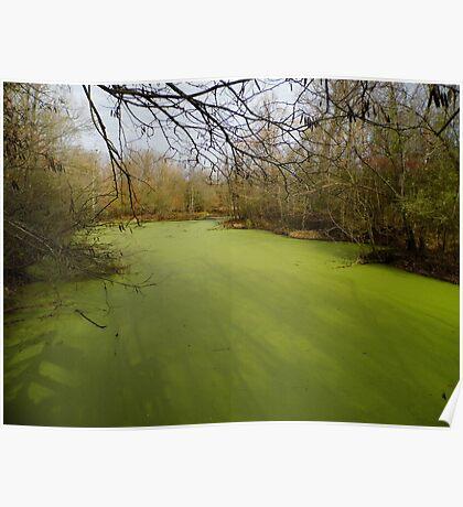 Green Swamp Poster