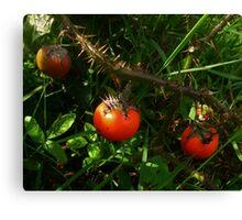 Mystery Vegetable Canvas Print