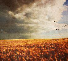 Summer Birds by Denise Abé