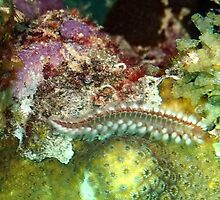 Coral Reef Bearded Fireworm - Caribbean Undersea Life by Amy McDaniel