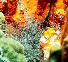 Corkscrew Anemone and Arrow Crab Coral Reef Grotto by Amy McDaniel