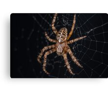 Day 2 - Spider Canvas Print