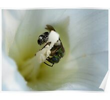 White Nectar 8226 Poster