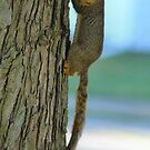 Long Squirrel by Keala