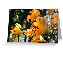 """Golden Splendor"" Family of Lilies Greeting Card"