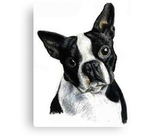 Boston Terrier Dog Portrait Canvas Print