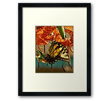 Butterfly on Turks Cap Lily Framed Print