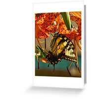 Butterfly on Turks Cap Lily Greeting Card