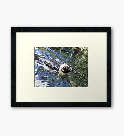 honolulu penguin Framed Print