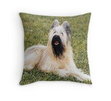 Briard Dog Portrait Throw Pillow