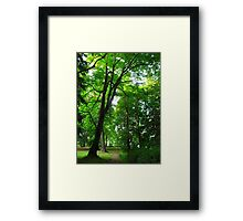 Green Trail Framed Print