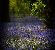 The Pixie's Bluebell Patch by Chris Lord