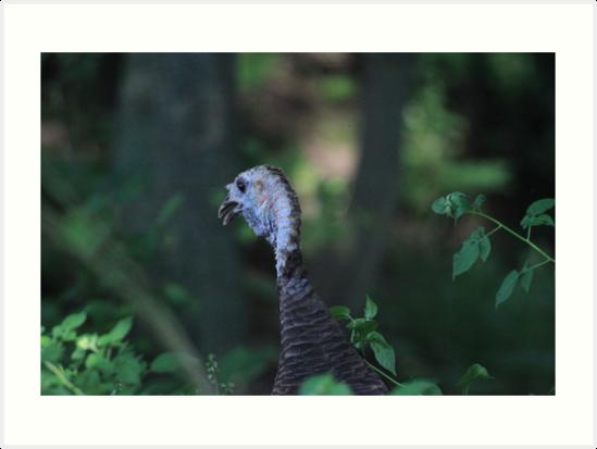 Turkey Head by Thomas Murphy