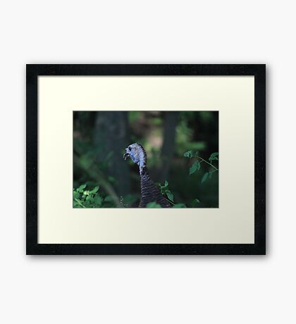 Turkey Head Framed Print