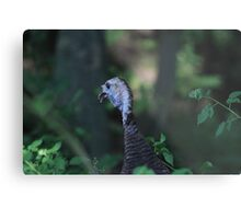 Turkey Head Metal Print