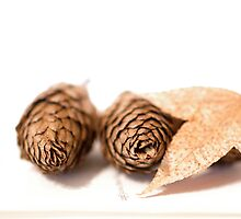 Pine cones and Autumn leaves by Clare Colins