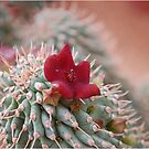 SUCCULENTS OF NAMAKWALAND - WESTERN CAPE SOUTH AFRICA by Magaret Meintjes