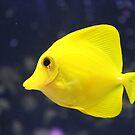 Yellow Fish by Annie Underwood