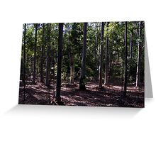 Tall Eucalypts - Candy Matthews Greeting Card