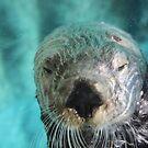 Underwater Otter by Annie Underwood