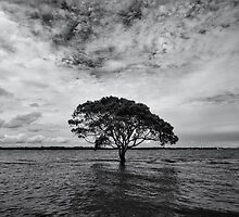 """A Lonely Life"" ∞ Brighton, QLD - Australia by Jason Asher"