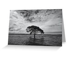 """A Lonely Life"" ∞ Brighton, QLD - Australia Greeting Card"