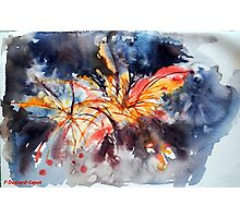 Firework, featured in ASA, PaintBook  Photographic Print