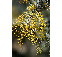 Natures Lace Photographic Print