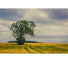 Farm Tree Photographic Print