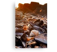Sunset Shells Canvas Print