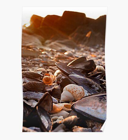 Sunset Shells Poster