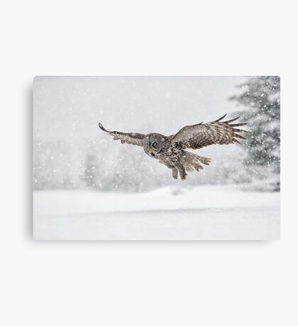Always on the hunt... Canvas Print