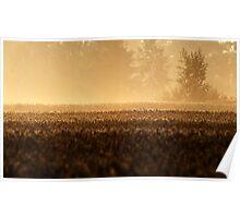 25.7.2013: Wheat Field, Summer Morning Poster