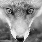 Face Fox by ChrisMillsPhoto