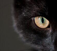 Cat's Eye by ChrisMillsPhoto