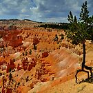 Bryce with Tree by Bob Moore