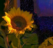 Sunflowers for Madonna by Milada Kessling