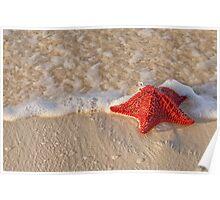 Bahama Starfish Poster