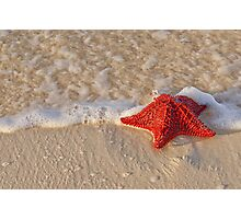 Bahama Starfish Photographic Print