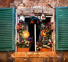 Tuscan window - Siena by newbeltane