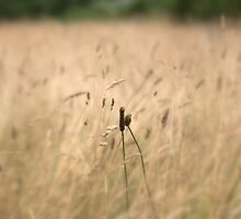 """ In A Field Of Soft Rye "" by Richard Couchman"