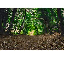 Kendal Woods Photographic Print