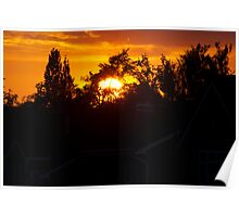Sunset through trees Poster