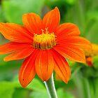 Flower by Alberto  DeJesus